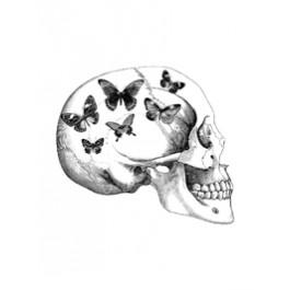 Skull with butterflies 20x25