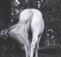 Ponytail 50x70