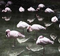 Flamingos 50x70