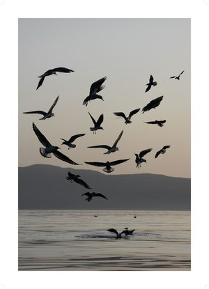 Birds of the Lake 30 x 40