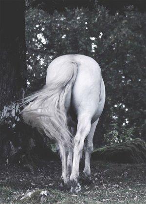 Ponytail 30 x 40