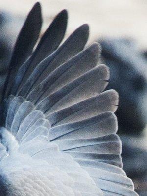 Wings II  30 x 40