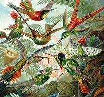 Retro Birds 30x40