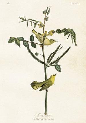 Gula fåglar på kvist 35x50