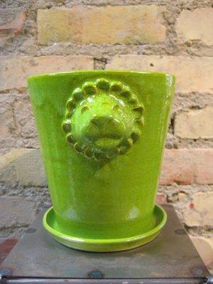 Ljusgrön Lejonkruka