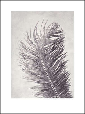 Feather 30x40