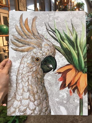 Parrot Frittillaria 30x40