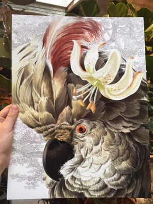 White Parrot 30x40