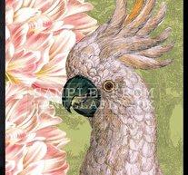 Parrot & Tulip 30x40