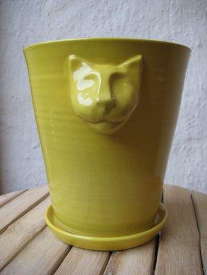 Kattkruka Gul