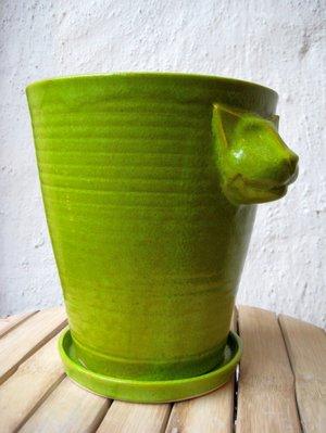 Kattkruka Ljusgrön