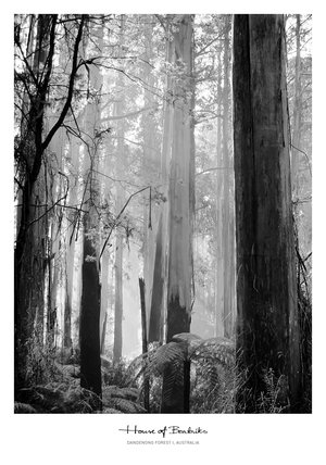 Forest I 50 x 70