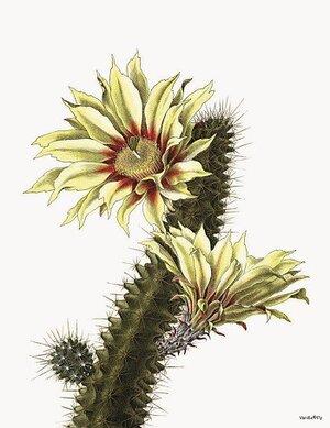 Blommande Kaktus 20x25