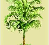 Palm 30x40