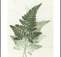Fern Green 50x70